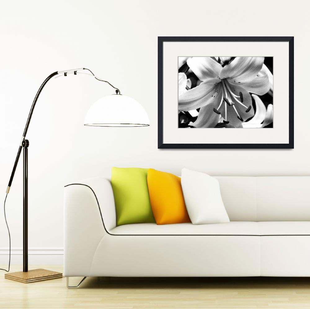 """""""Upside Down Lily - Infared Black & White""""  (2011) by PurpleSkyPhoto"""