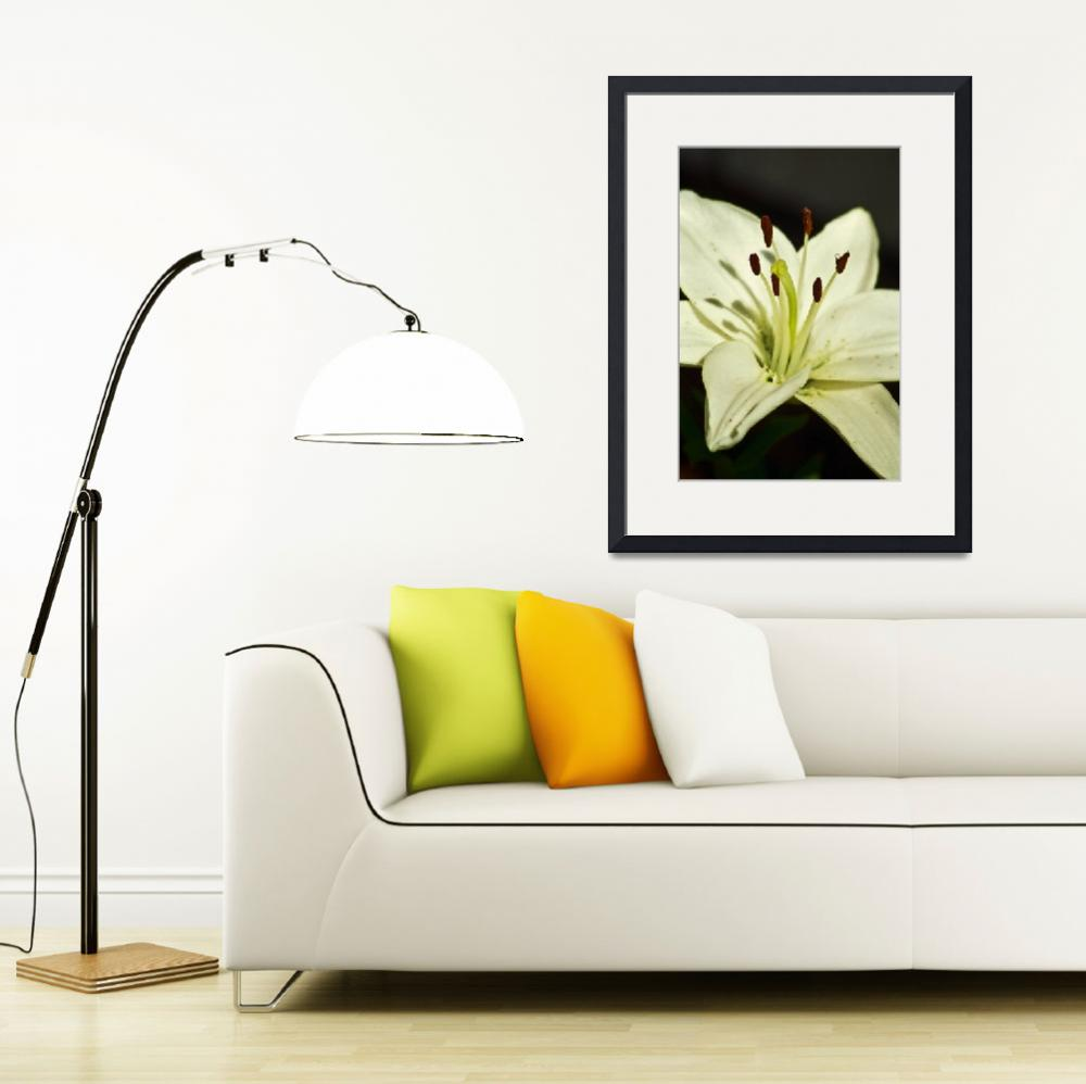 """""""White Lily""""  by petemiller"""