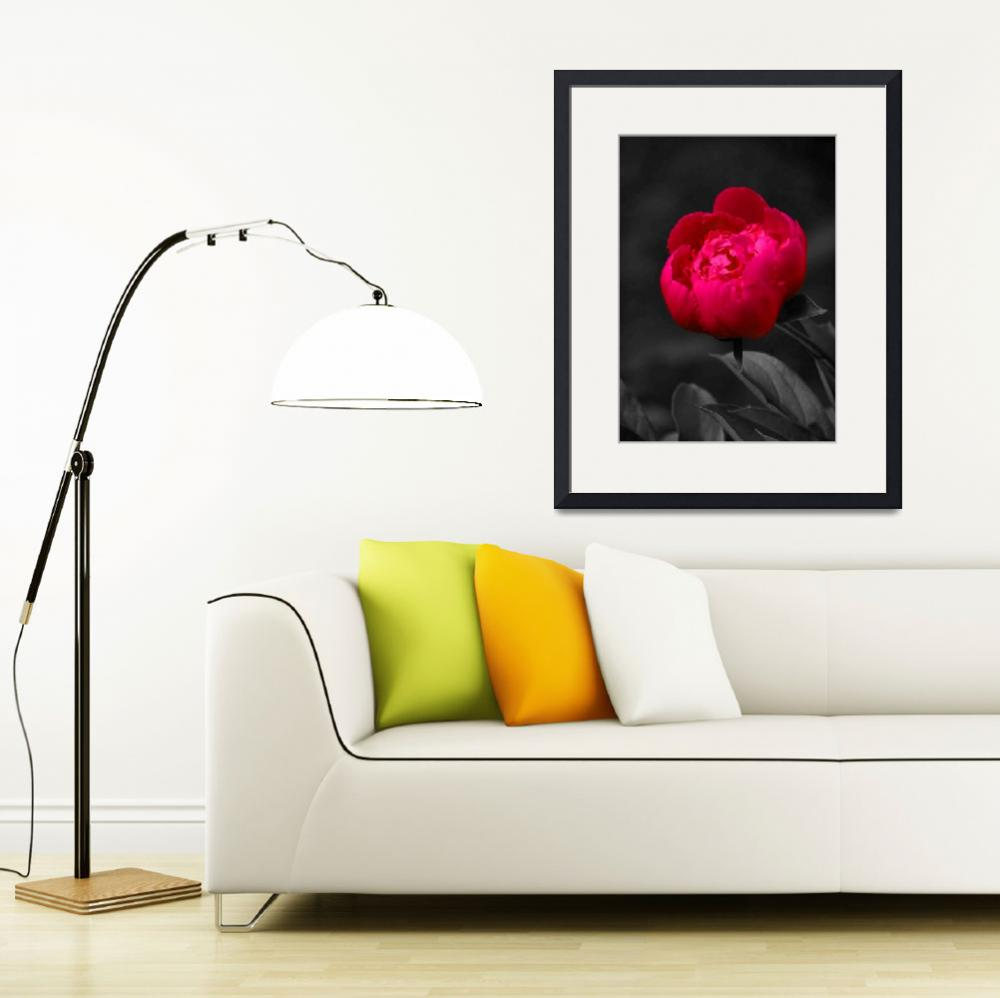 """""""Red Rose&quot  (2010) by designedbydigital"""