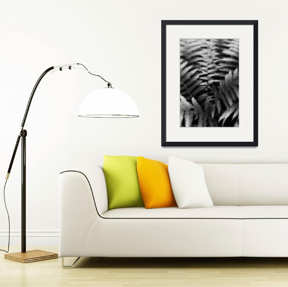 """""""Ferns in Black and White by Jim Crotty&quot  by jimcrotty"""