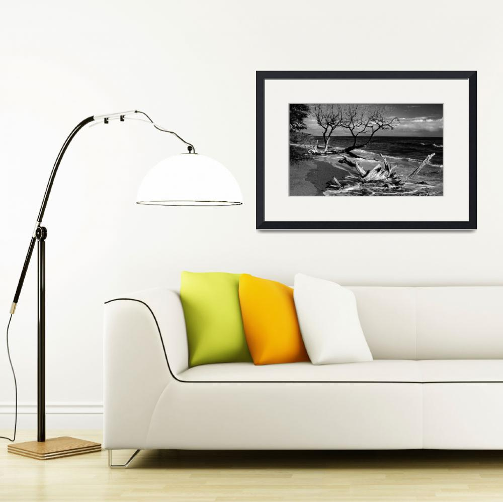 """Black and White Driftwood Fine Art Print&quot  by lightningman"