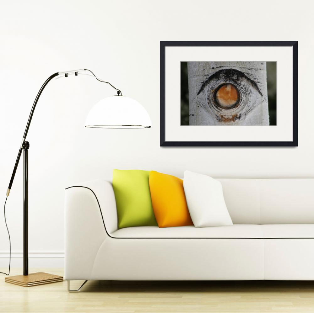 """Aspen Eye&quot  (2008) by imagesbyabel"
