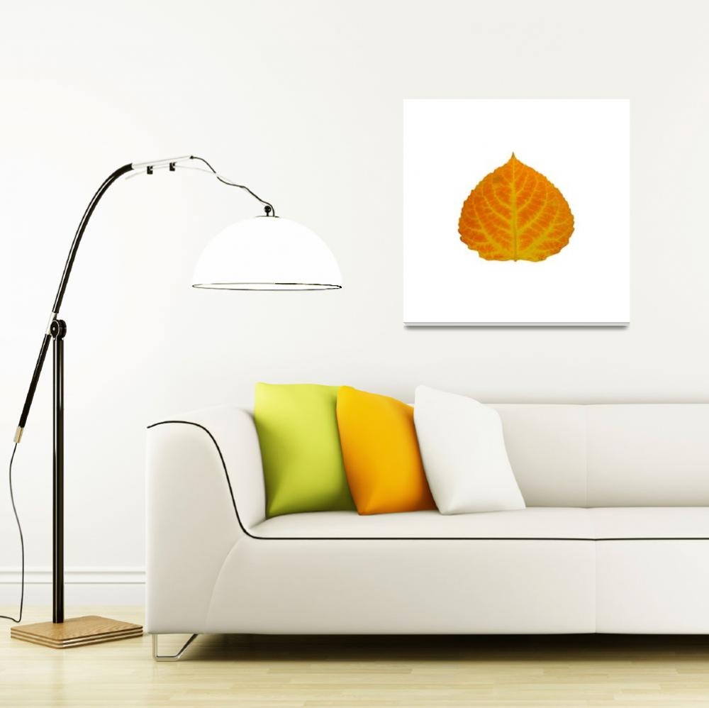 """Orange and Yellow Aspen Leaf 2""  (2014) by AgustinGobaFineArts"