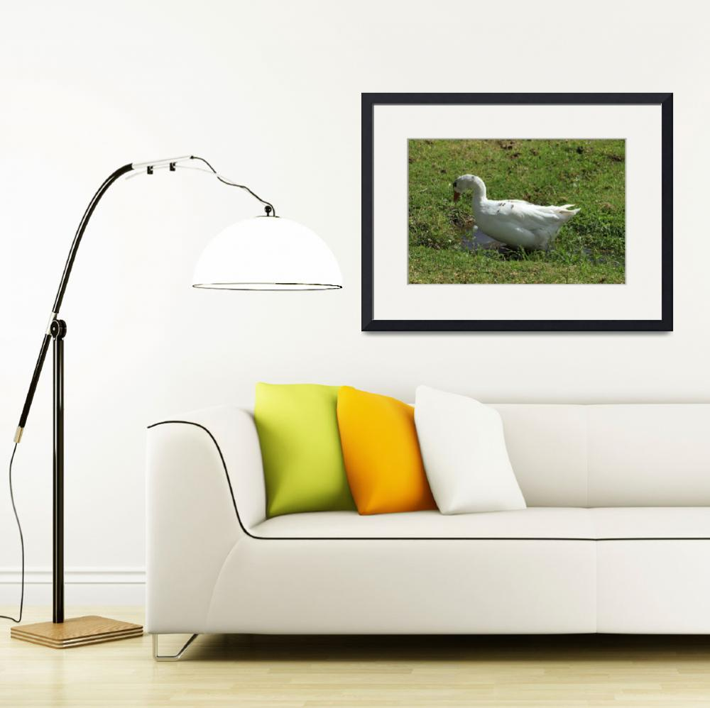 """""""White Goose in a Field&quot  (2014) by rhamm"""