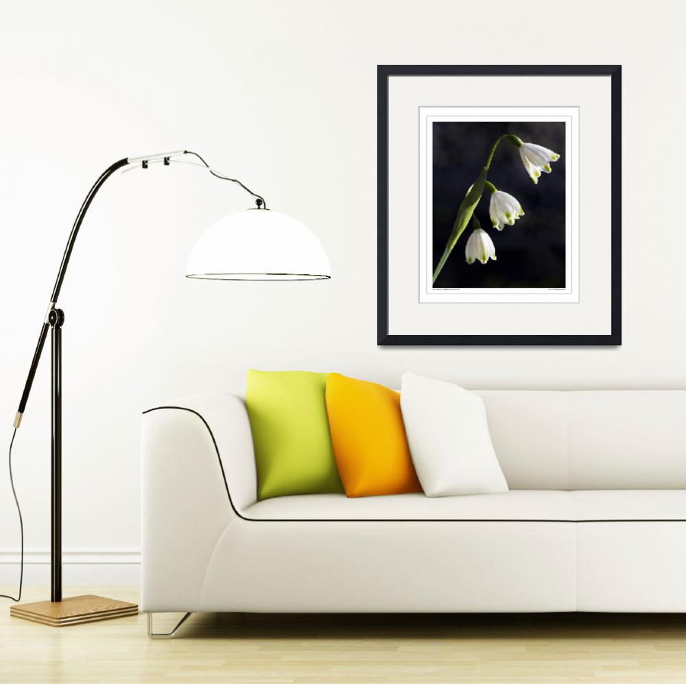 """""""Snowdrops, (Galanthus nivalis)&quot  by SussexImages"""