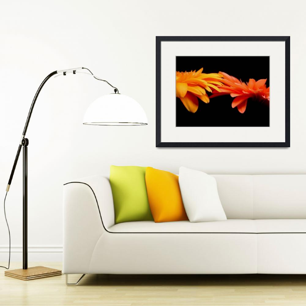 """""""Red & Orange Gerbera Daisies Blaze&quot  (2006) by Infomages"""
