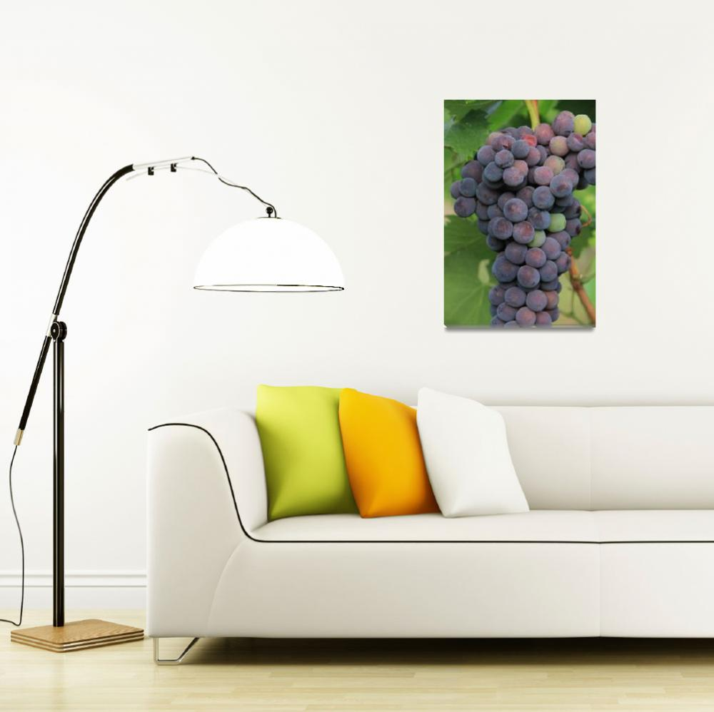"""Grapes&quot  (2011) by easyfigure"