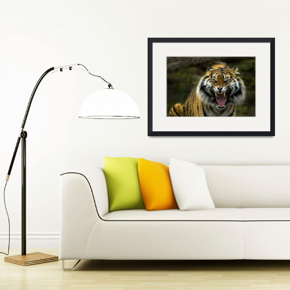 """""""Eye of the Tiger&quot  by Dawsonimages"""