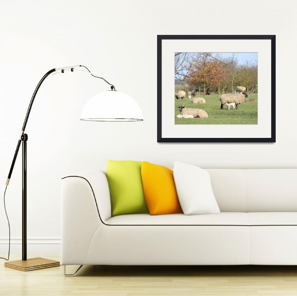 """Lambing&quot  (2010) by NatureandWildlife"