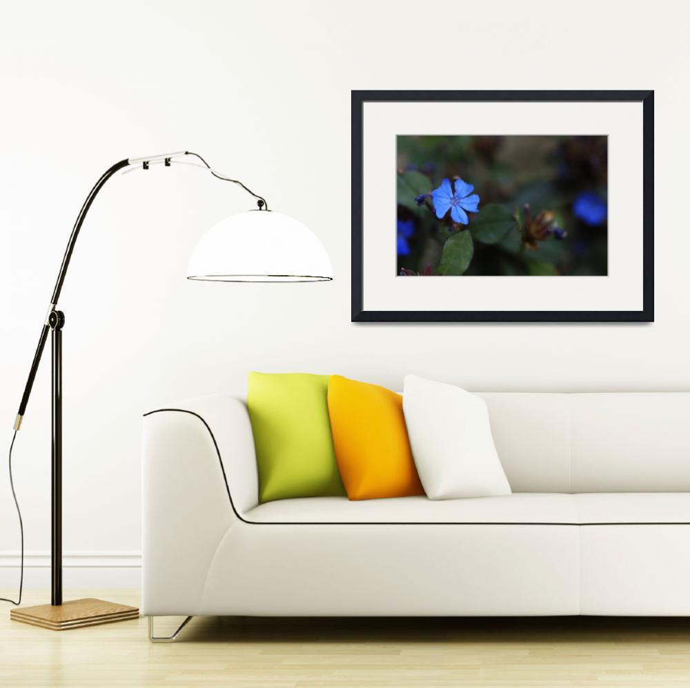 """""""Dwarf Plumbago Flower_1686&quot  (2005) by AmbientCreations"""