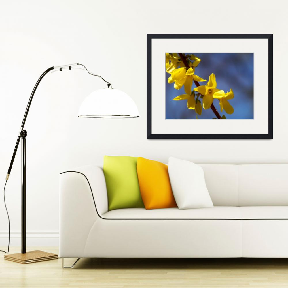 """""""Forsythia&quot  (2009) by SteveEastwoodPhotography"""