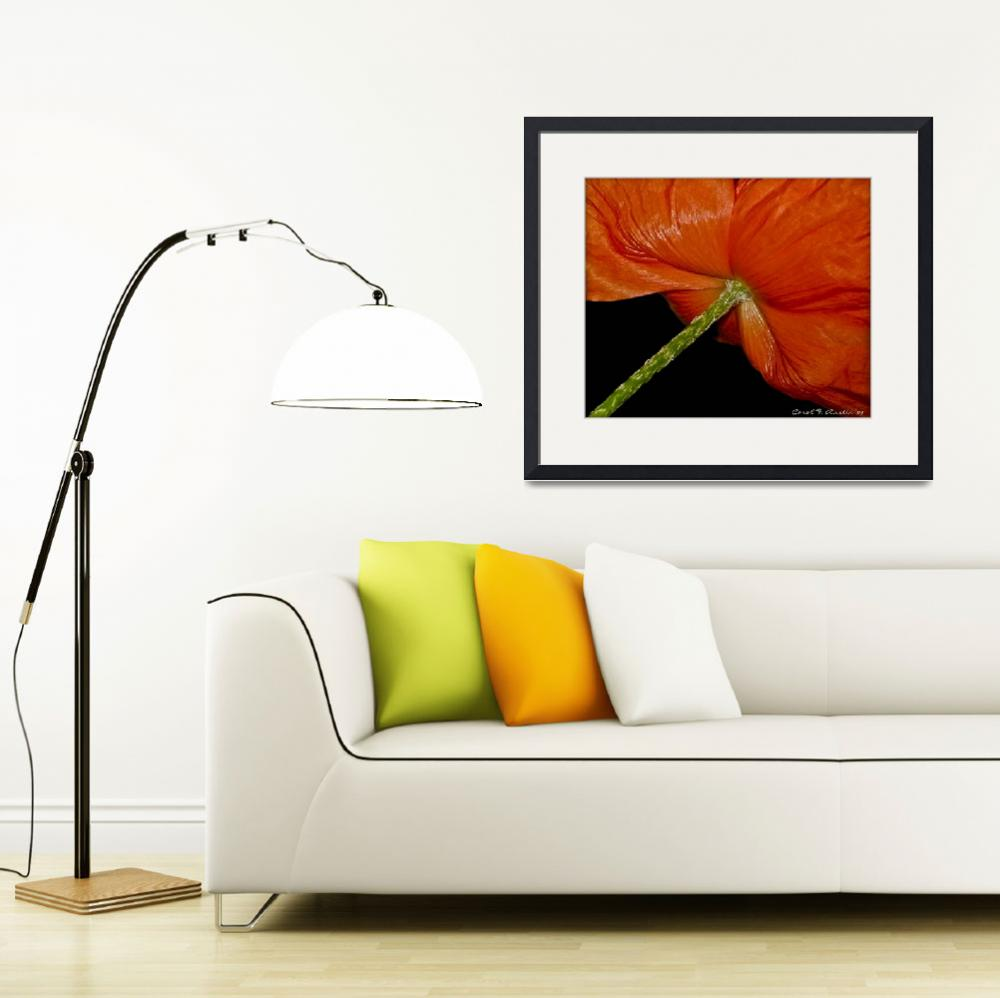 """""""Red Poppy Signed and Dated by Photographer""""  (2008) by PhotographsByCarolFAustin"""