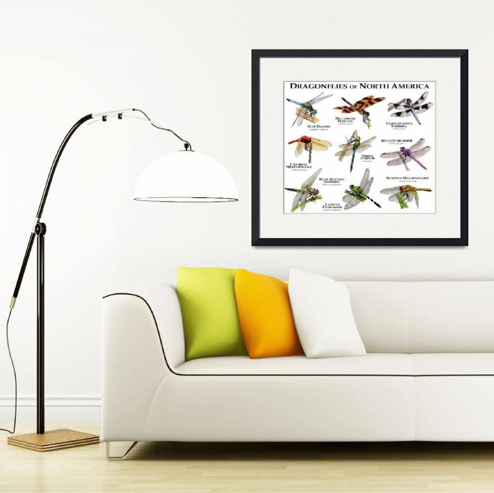 """""""Dragonflies of North America&quot  by inkart"""