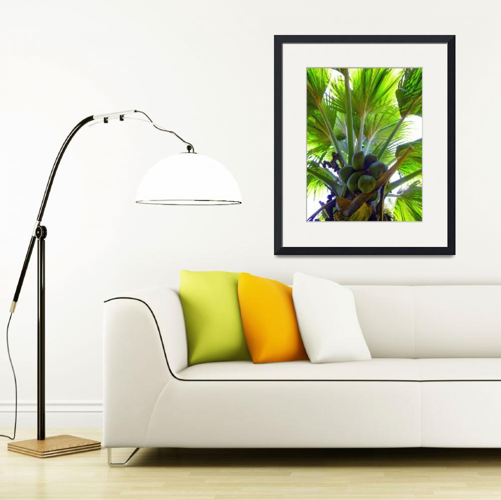 """""""Double Coconut palm""""  (2012) by joeyartist"""