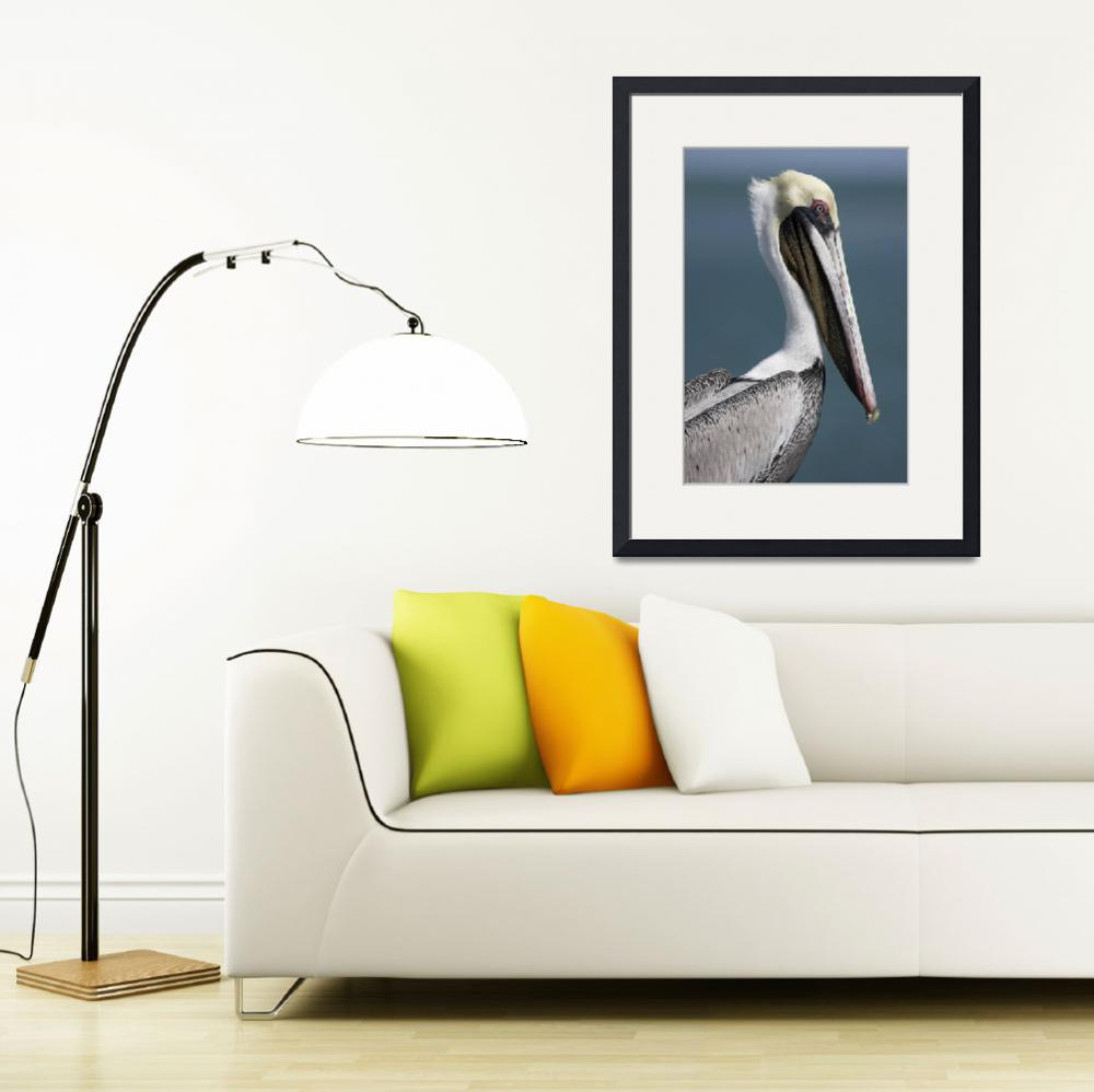 """Brown Pelican Photograph&quot  by ArtLoversOnline"