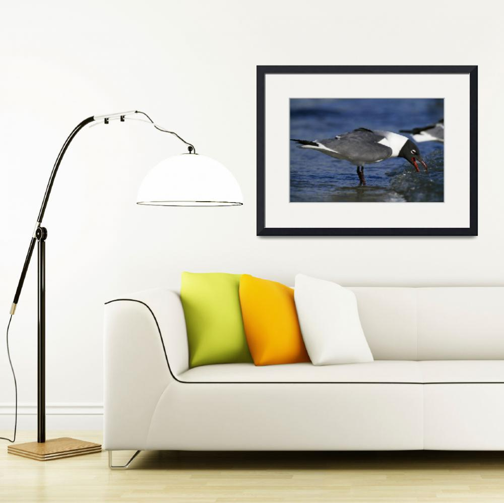 """""""Laughing Gull Seabird (Larus Atricilla) On Beach""""  by Panoramic_Images"""