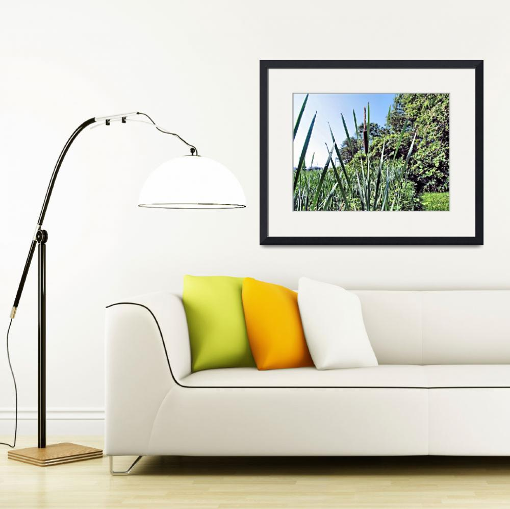 """""""LONE  CATTAIL&quot  (2007) by Clipprx"""