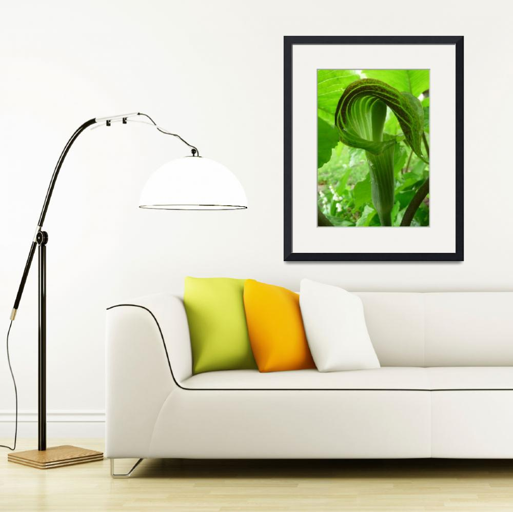"""""""Jack-in-the-Pulpit, Dee Oberle&quot  (2008) by GypsyChicksPhotography"""
