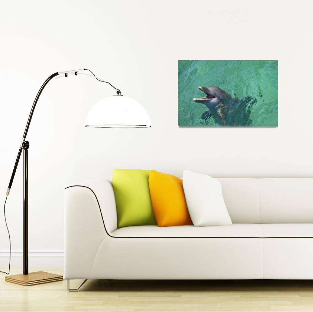 """Roatan, Bay Islands, Honduras Bottlenose Dolphin""  by DesignPics"