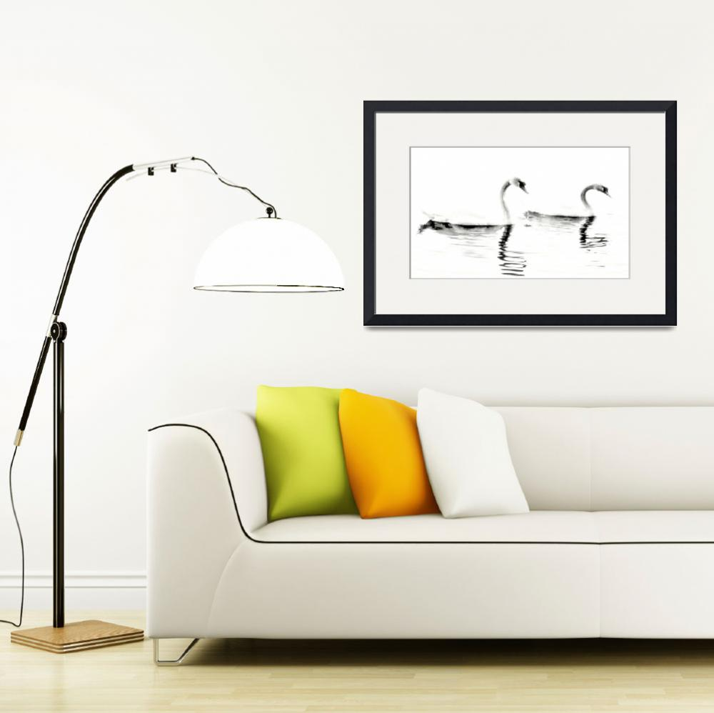 """Two Swans (High Contrast)&quot  (2010) by bavosiphotoart"