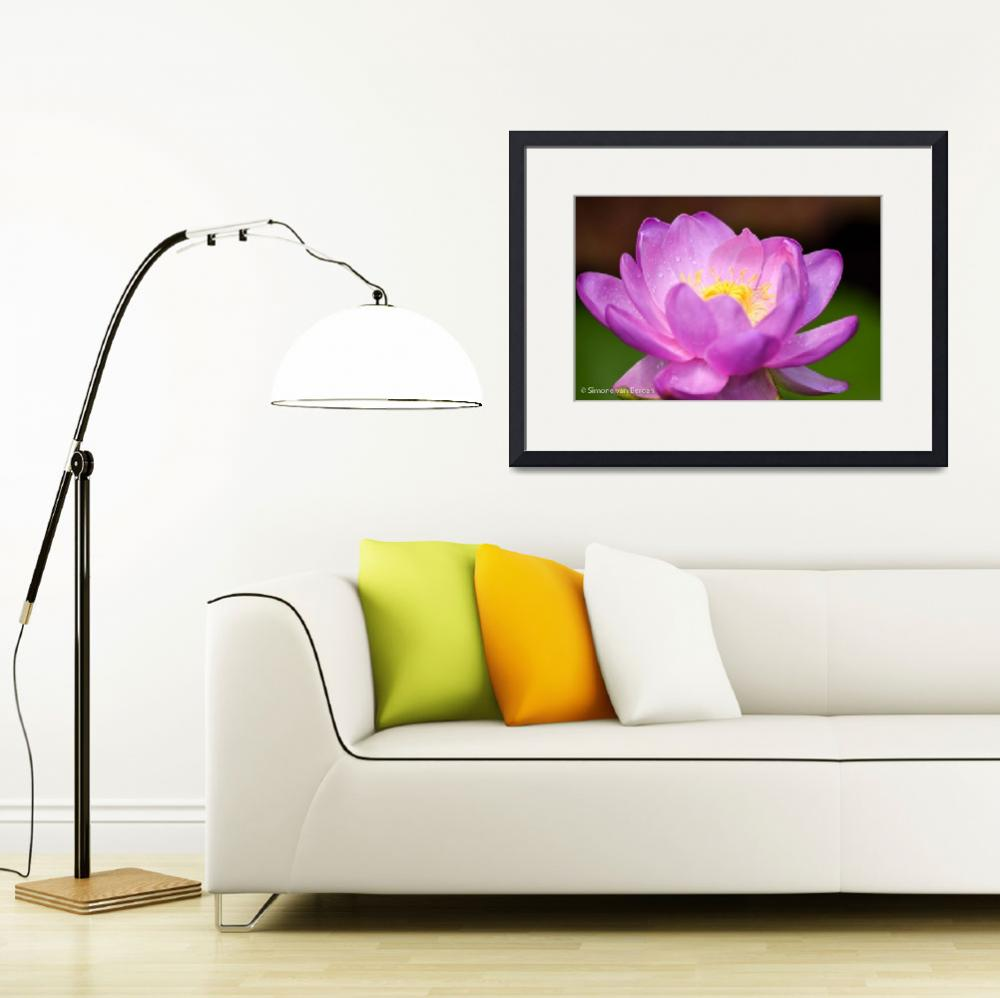 """""""Pink Waterlily""""  (2015) by simonevanbergen"""