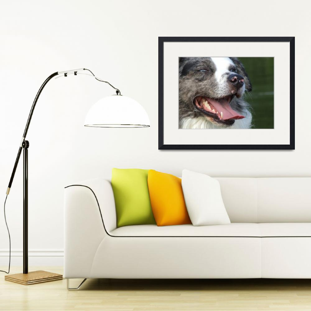 """""""Border Collie""""  (2009) by Hartphotography"""