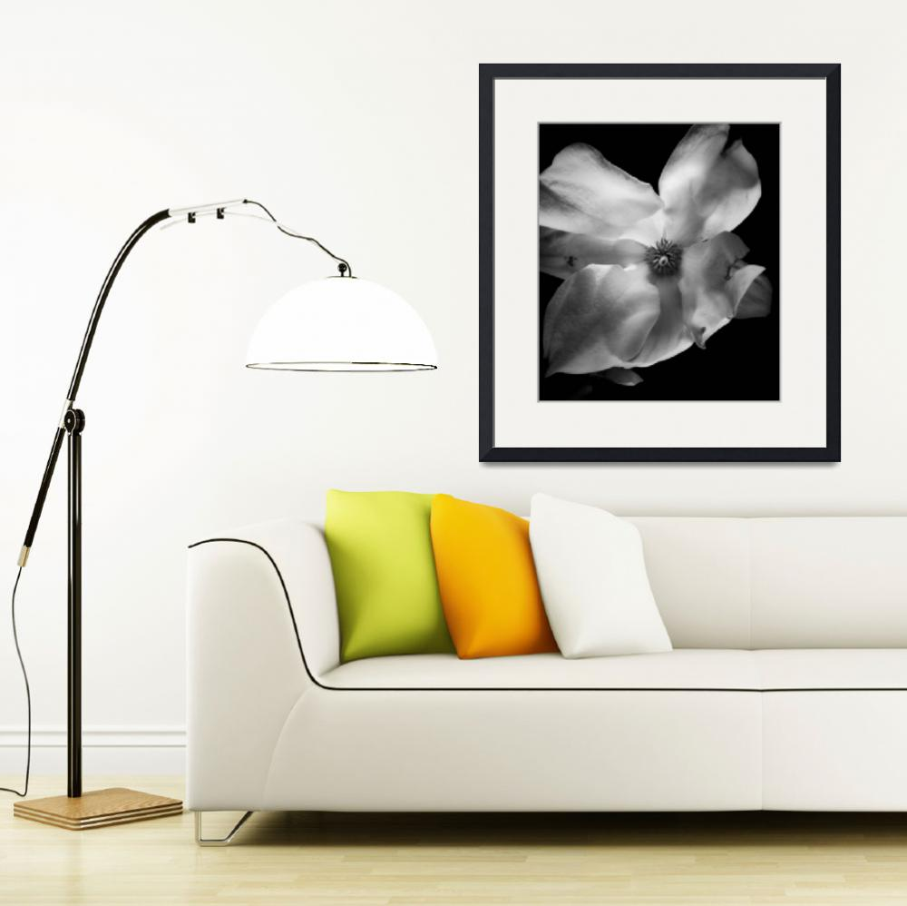 """Magnolia Blossom Through a Pinhole&quot  (2008) by scott_speck"
