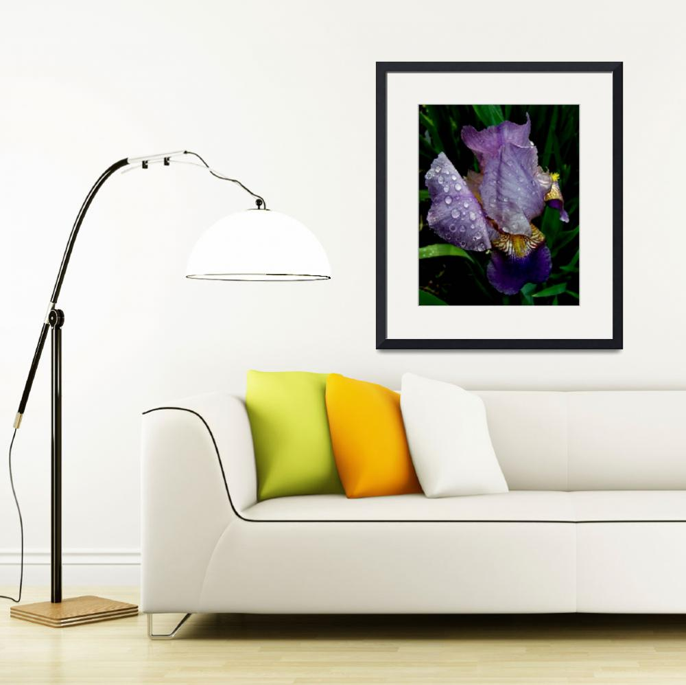 """Another Blue Iris&quot  (2009) by bavosiphotoart"