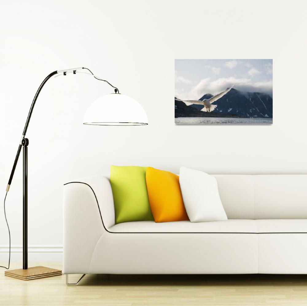 """Ivory gull in flight along the coast of Svalbard,""  by DesignPics"