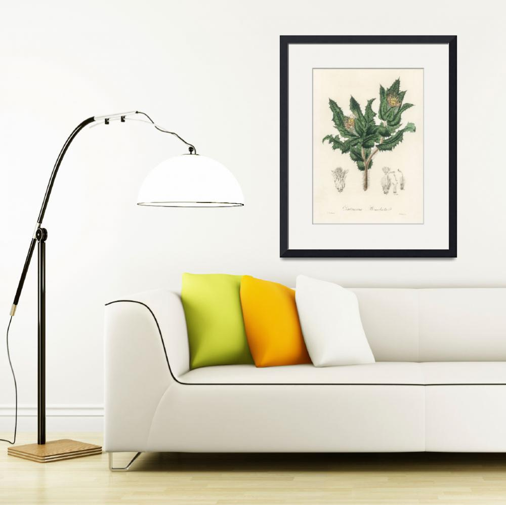 """""""Vintage Botanical Holy thistle&quot  by FineArtClassics"""
