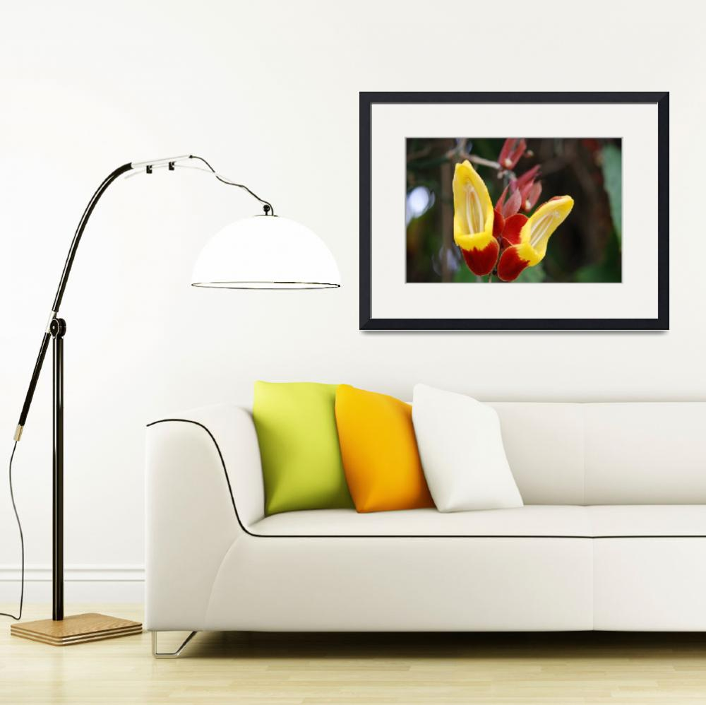 """Red and Yellow Slipper&quot  (2008) by paulagrantphoto"