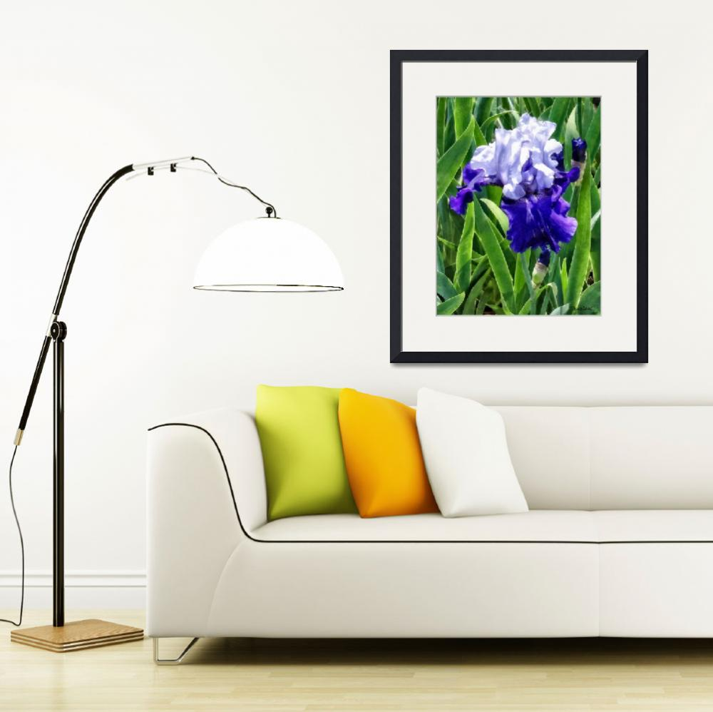 """Iris Best Bet&quot  by susansartgallery"