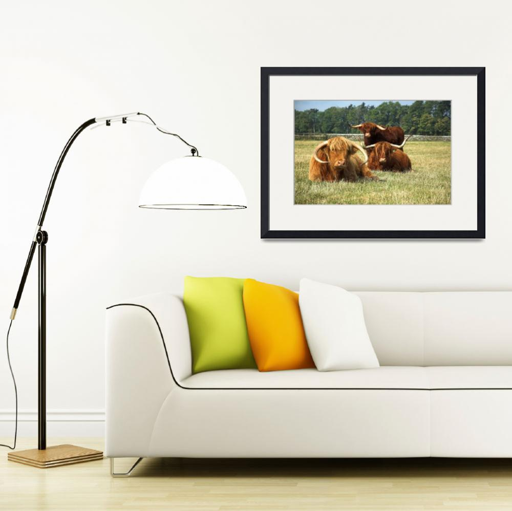 """Highland Cattle Posse&quot  by shortwork"