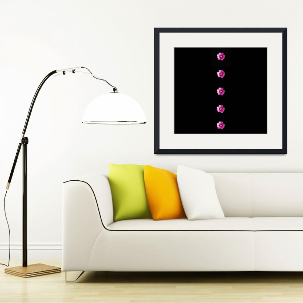 """""""Dramatic Cosmos flowers on black&quot  (2018) by NormaStampSunnyDaze"""