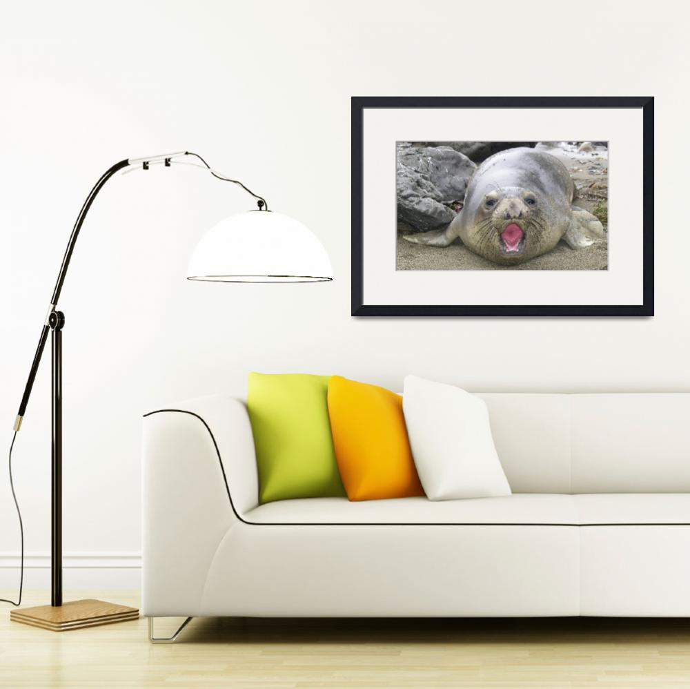 """""""Elephant Seal Defence&quot  by eyalna"""