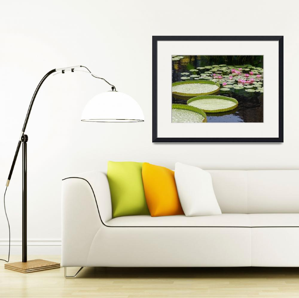 """""""Water Platters and Lilies&quot  (2008) by LightHeart"""
