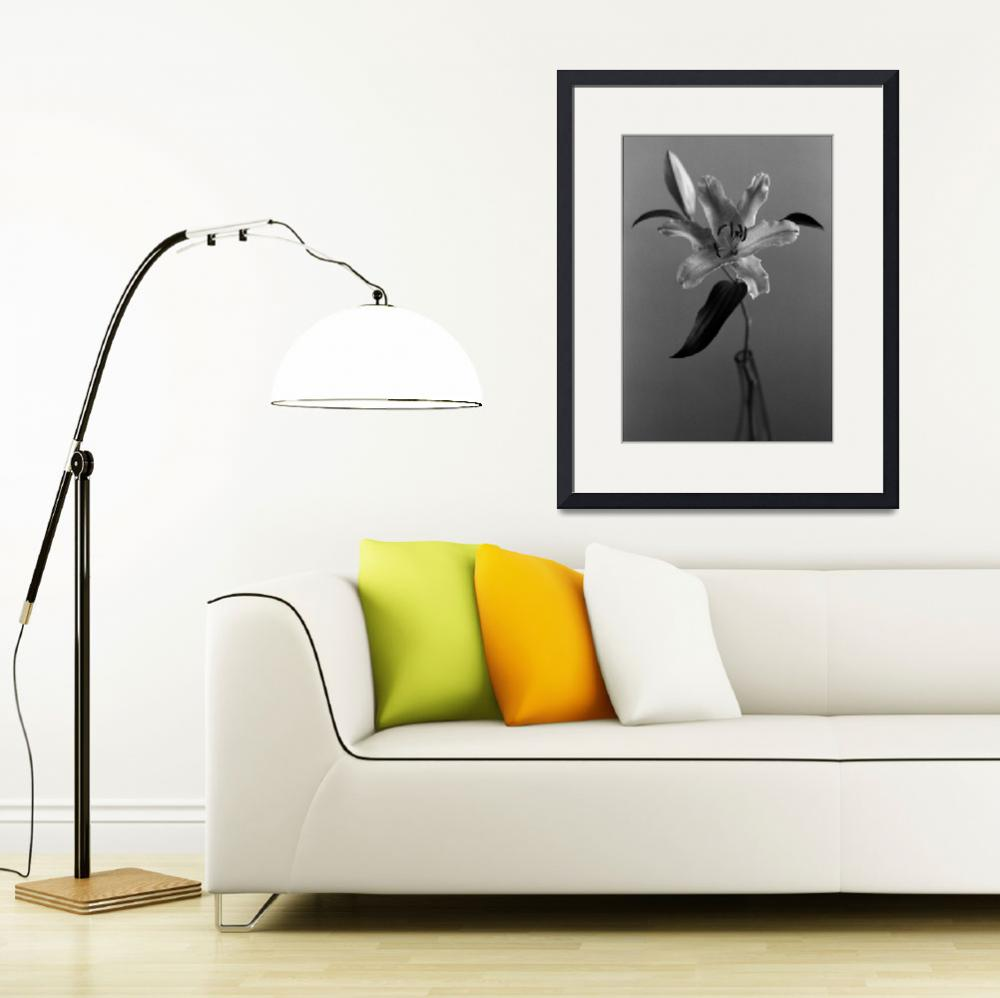 """""""Lily, Floral Still Life&quot  by Aldo"""