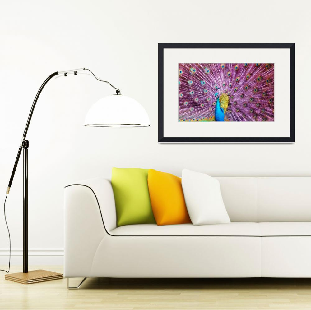 """""""Peacock""""  (2013) by gallerymay"""