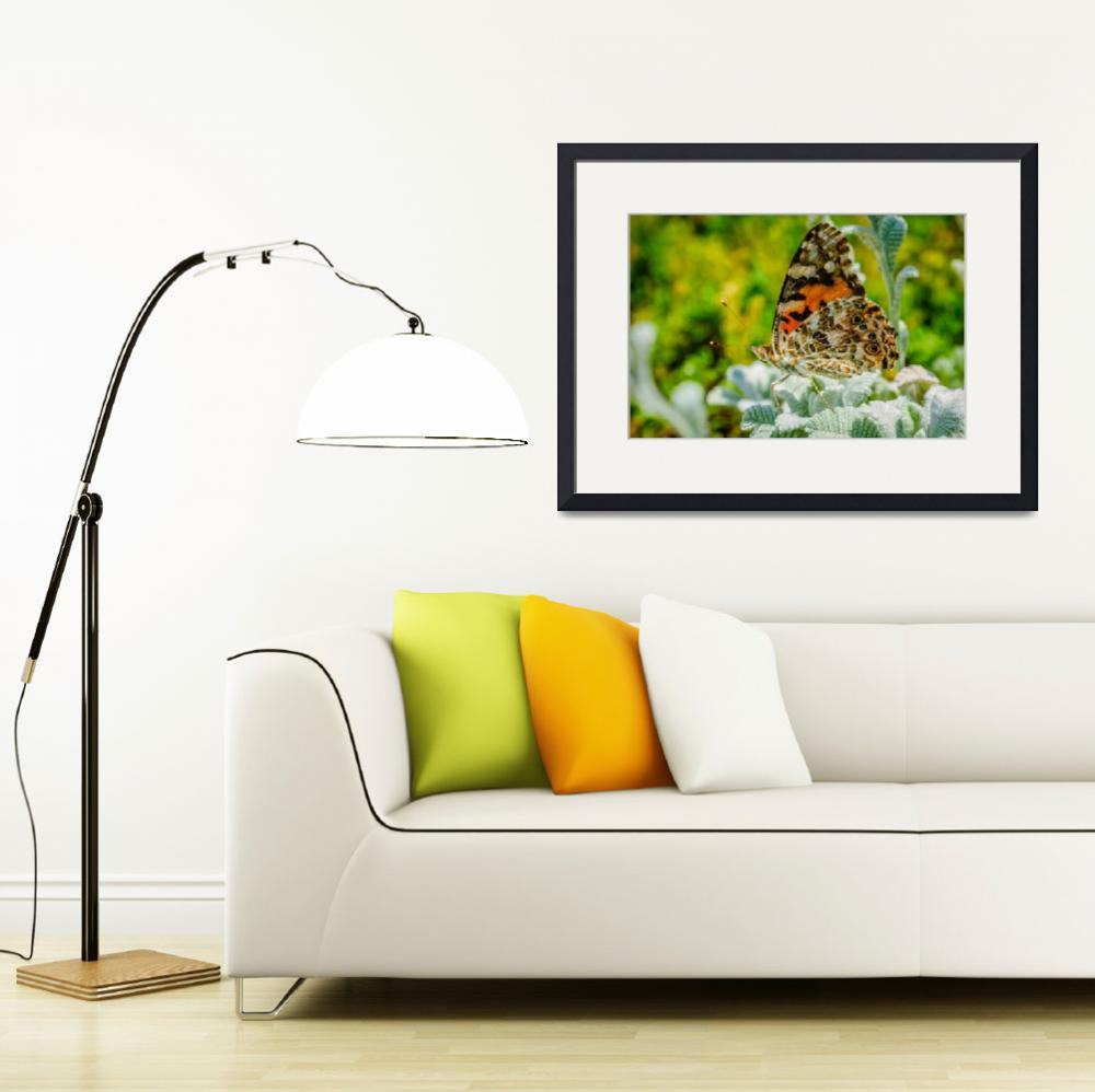 """""""Painted Lady Butterfly""""  by PronghornPix"""