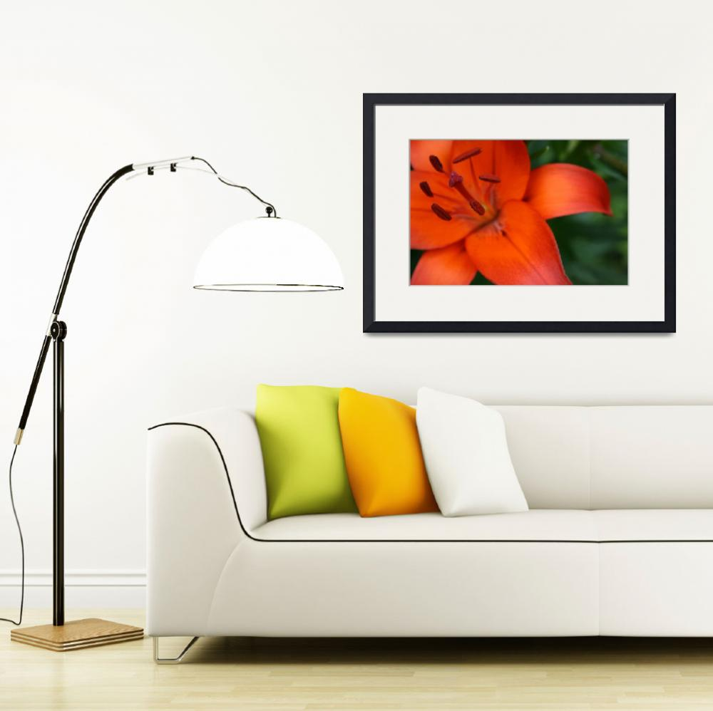 """""""Sunrise Lily Too&quot  (2008) by jmtphotography"""