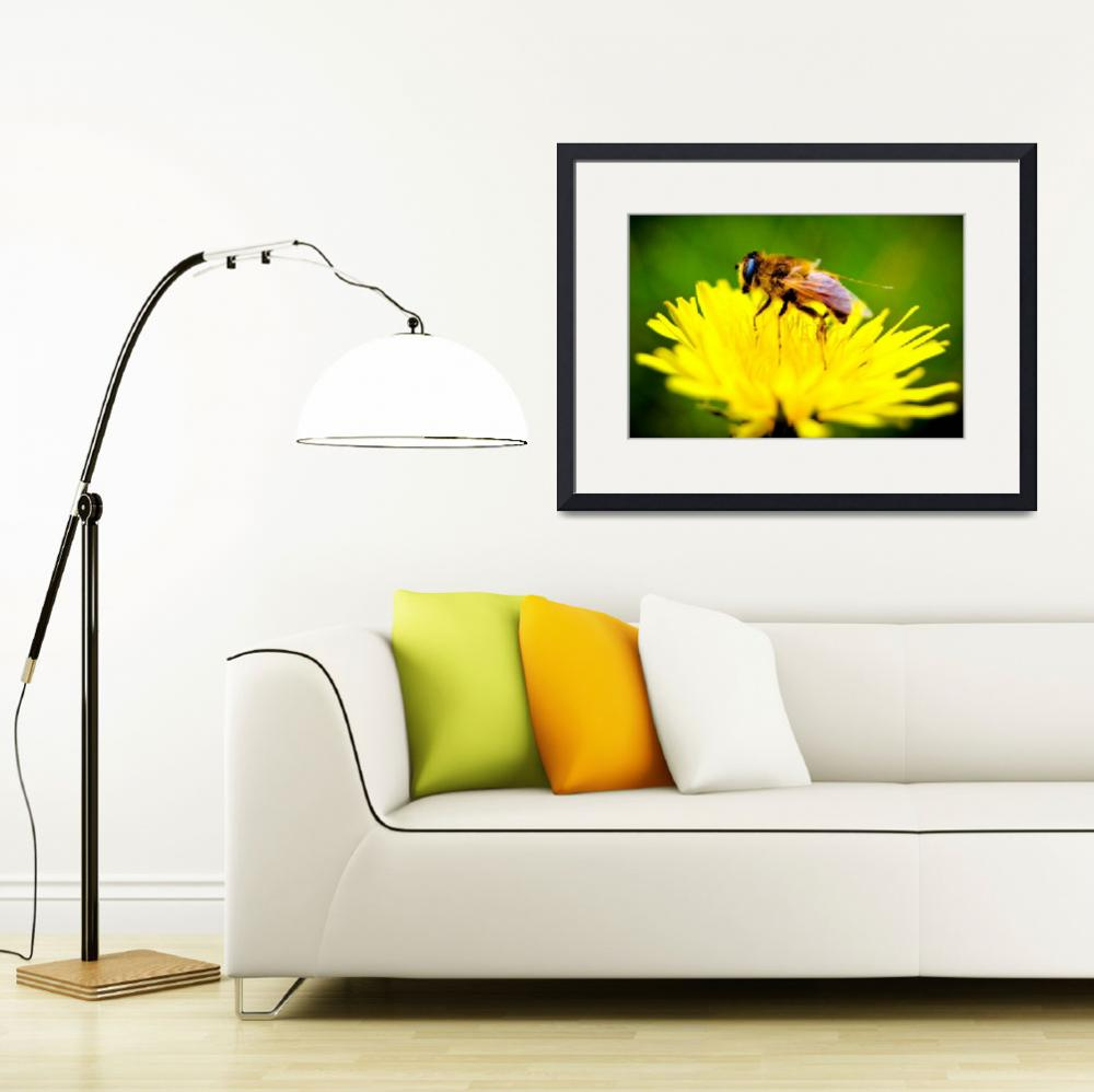 """Bee On A Yellow Flower In Spring""  (2010) by dc-photography"
