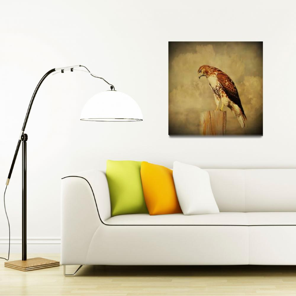 """""""Red Tail Hawk""""  (2014) by swaby"""