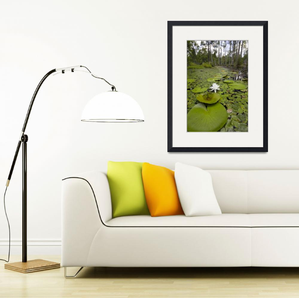 """""""Lily Pads Flower Swamp&quot  (2011) by DustinKRyan"""
