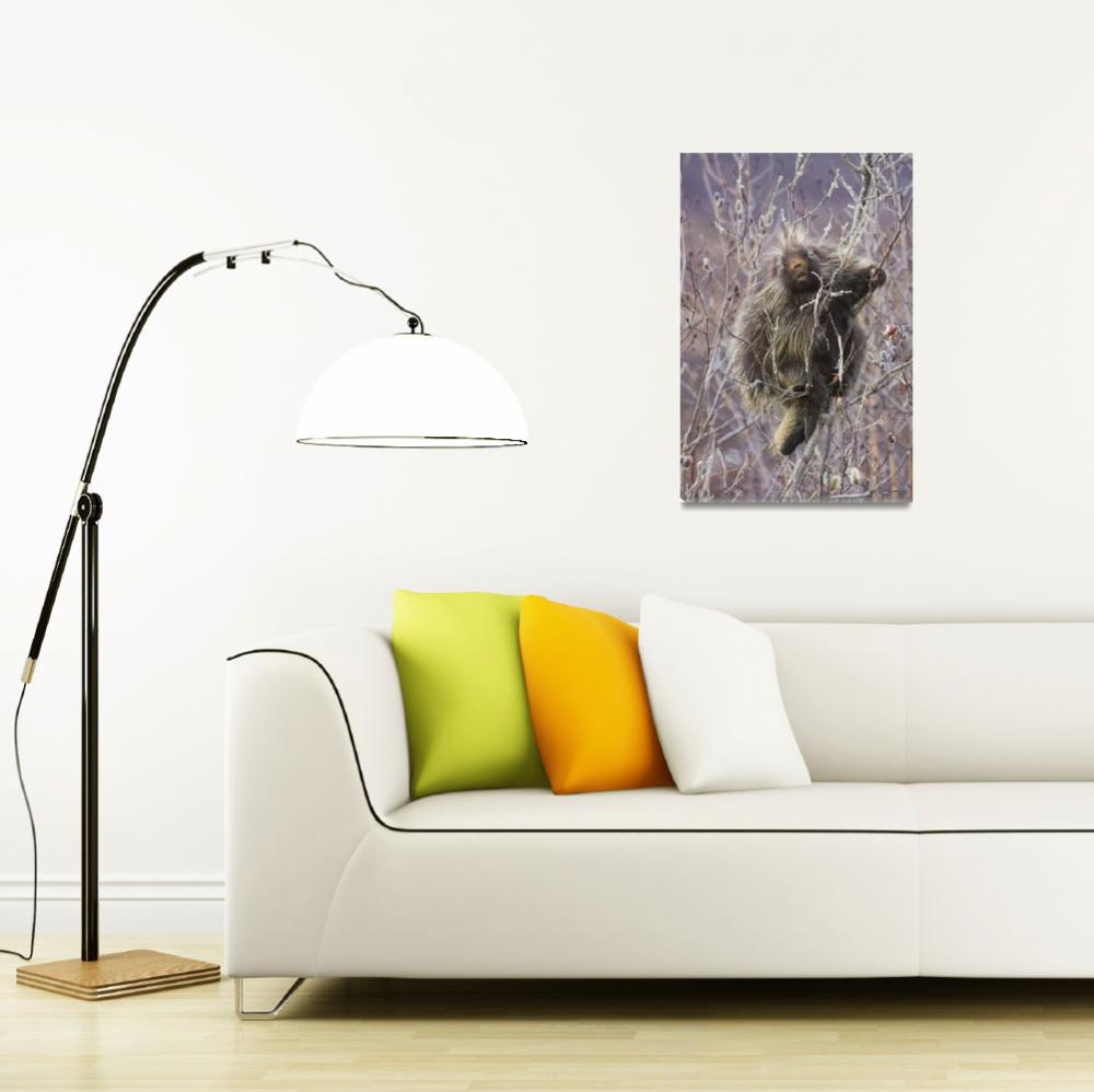 """""""Porcupine Hangs On A Willow Tree Branch, Interior&quot  by DesignPics"""