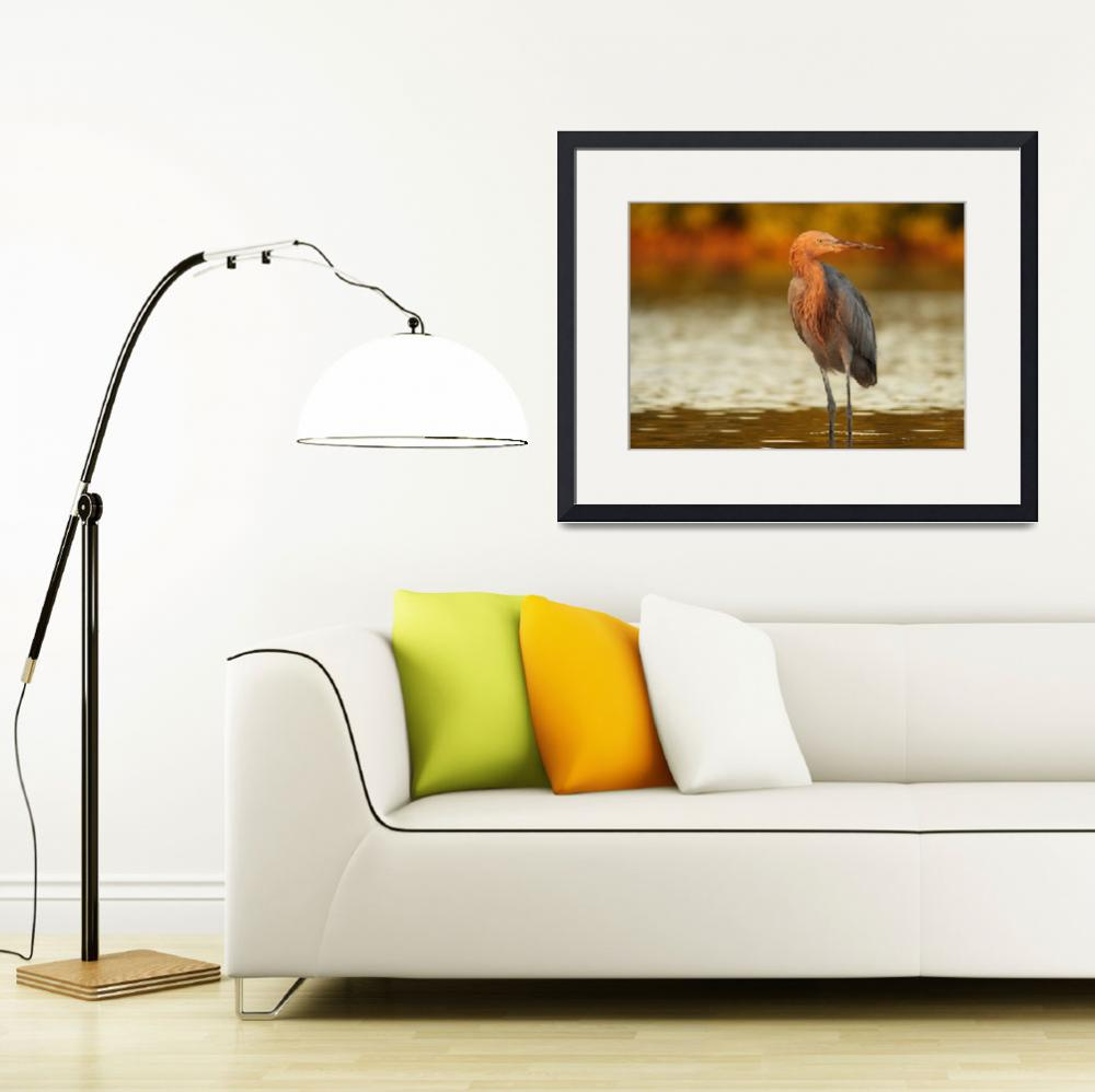 """Reddish Egret at Sunset""  by PSimmons"
