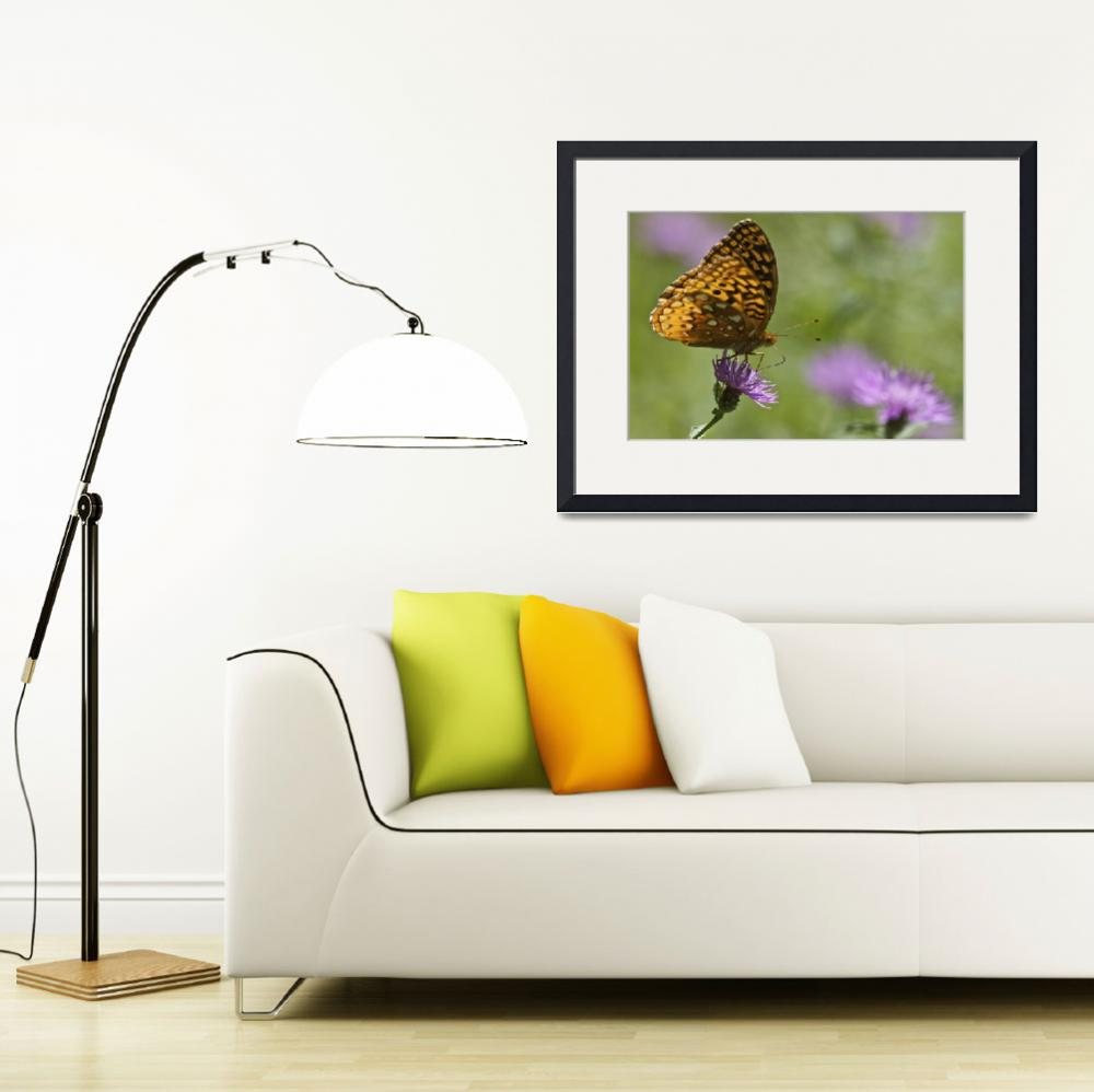 """Great Spangled Fritillary Butterfly""  by jimcrotty"