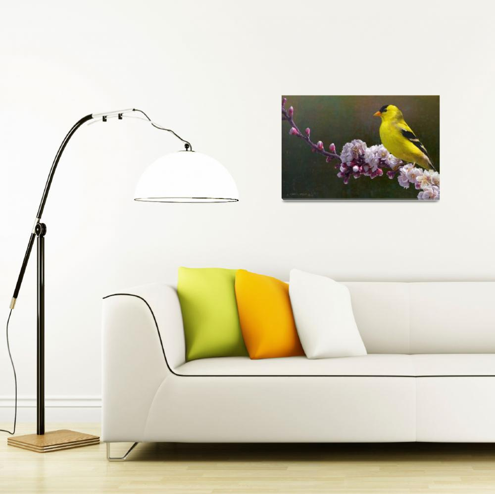 """""""rivals in color / goldfinch and blossoms""""  (2011) by rchristophervest"""