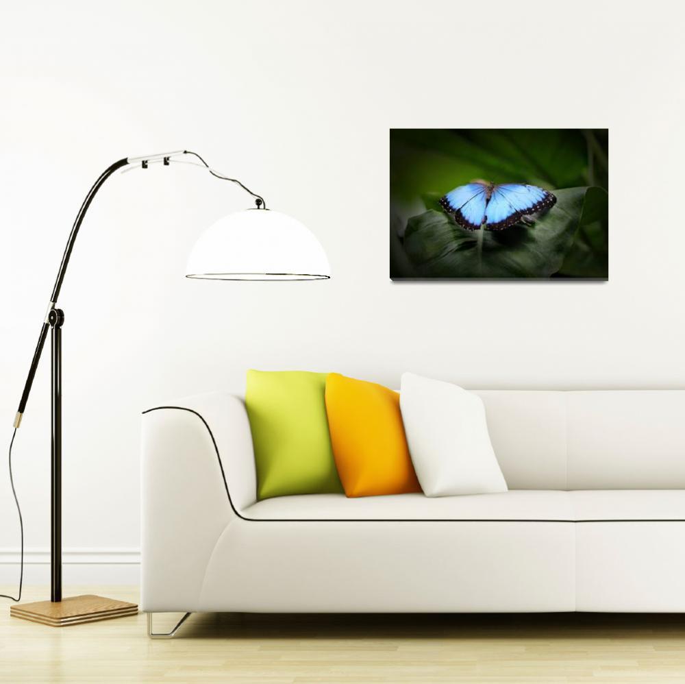 """Resting Blue Morpho Butterfly&quot  (2017) by KsWorldArt"
