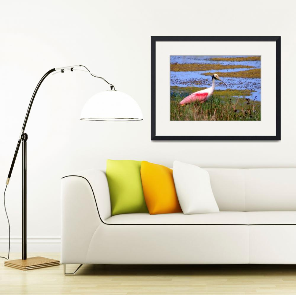 """Roseate Spoonbill""  (2010) by ChrisCrowley"