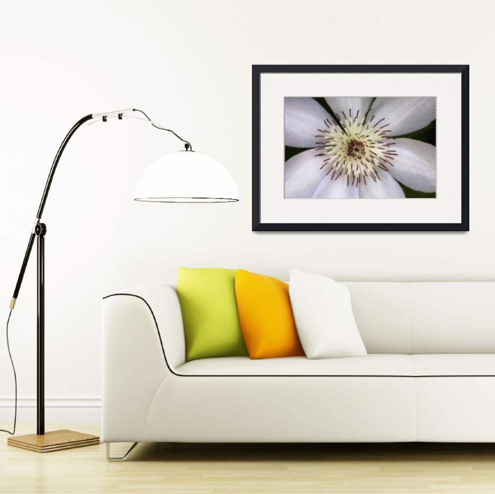 """White Clematis Flower""  (2014) by SoulfulPhotos"